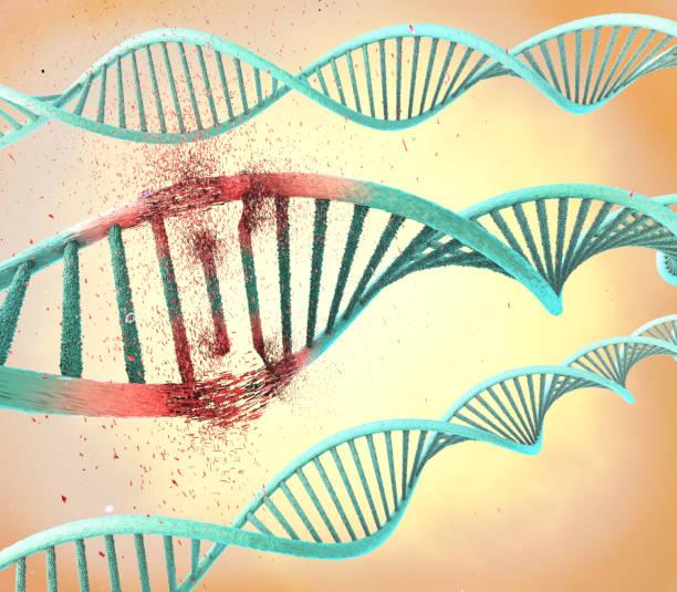 illustration of a damaged ribonucleic acid or  dna strand - mutazione genetica foto e immagini stock