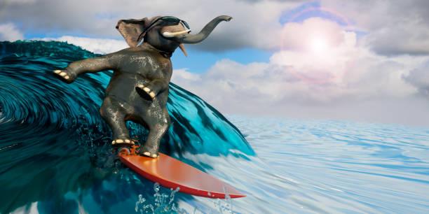 3d abbildung eines elefanten ist das meer als symbol für erholung und sport surfen. - digital surfer stock-fotos und bilder