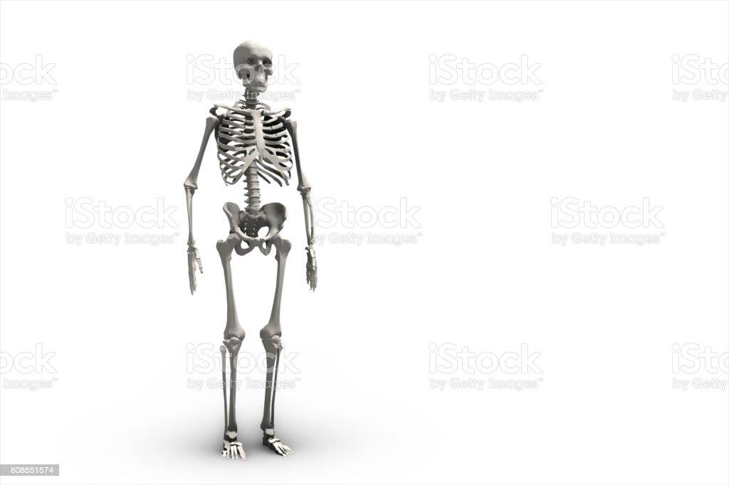 Illustration of a human skeletal system 3d illustration stock photo