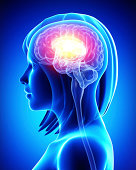 istock Illustration of a MRI style visualization of a female brain 461883303