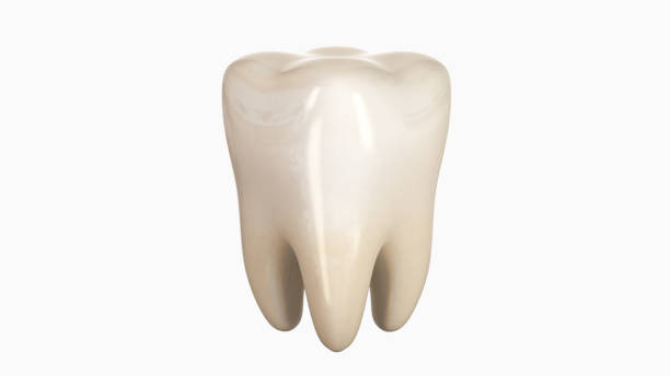 3D illustration of a tooth stock photo