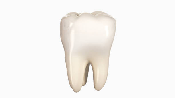 3d illustration of a tooth - teeth stock photos and pictures