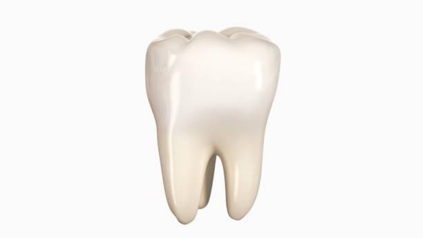 3d illustration d'une dent - dents photos et images de collection