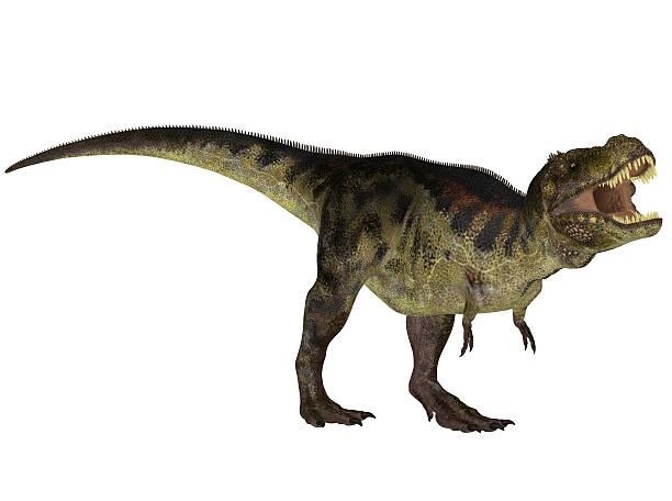 illustration eines tyrannosaurus - dinosaurier illustration stock-fotos und bilder