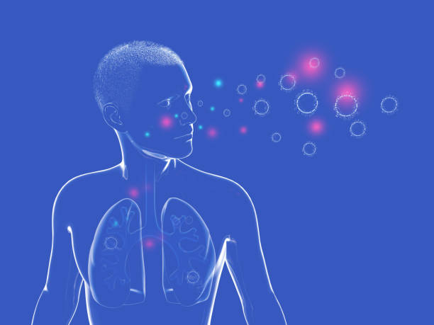 3D illustration of Anatomy of the human respiratory system and the viruses and bacteria that can enter it. Graphic representation of the lungs, trachea and ENT on a dark blue background. respiratory disease stock pictures, royalty-free photos & images