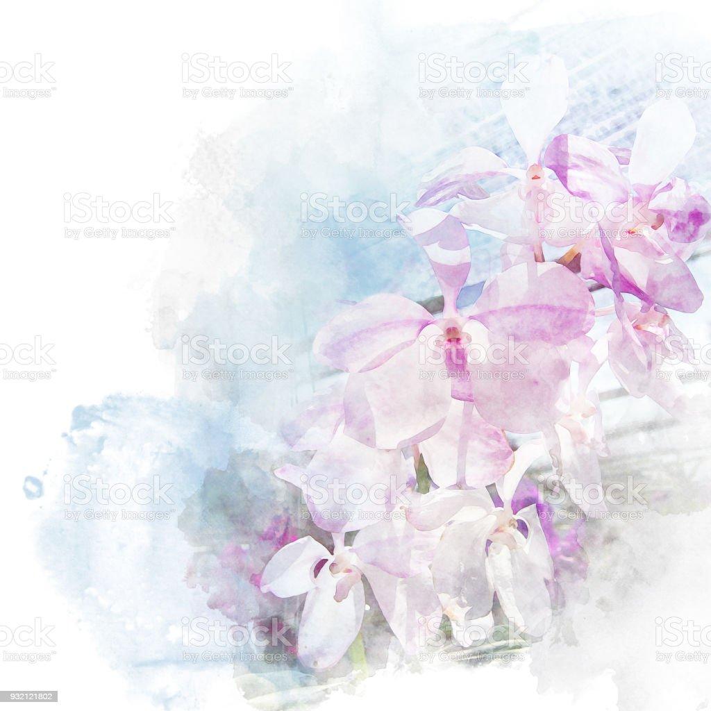 Darstellung der schönen Blüte Orchidee. – Foto