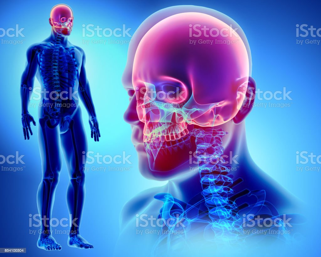 3D illustration of Cranium, medical concept. stock photo