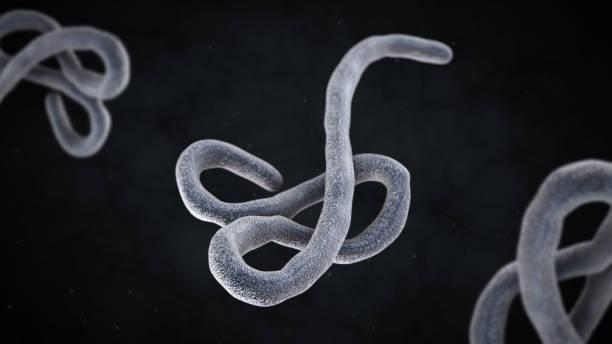 3D illustration of ebola  virus stock photo