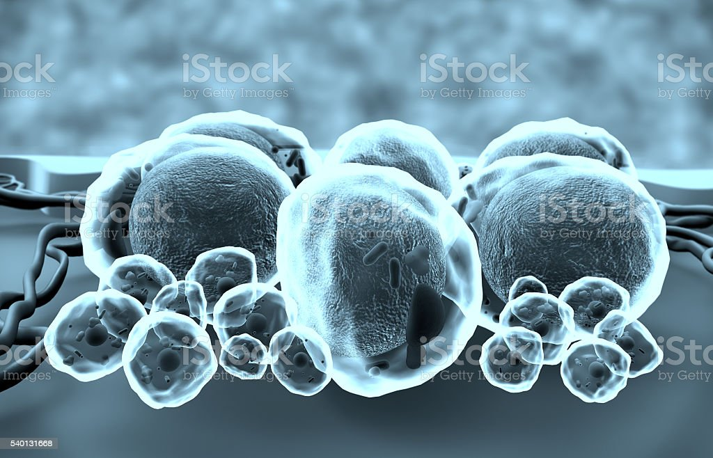 3D illustration of fat cells and capillaries stock photo