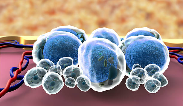 3D illustration of fat cells stock photo