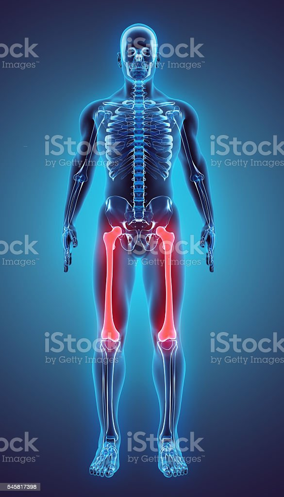 3D illustration of Femur, medical concept. stock photo
