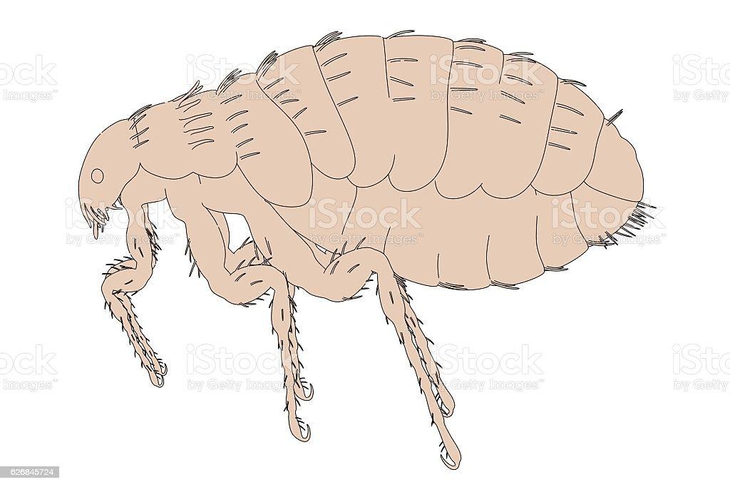 illustration of flea stock photo