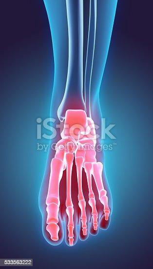 istock 3D illustration of Foot Skeleton, medical concept. 533563222