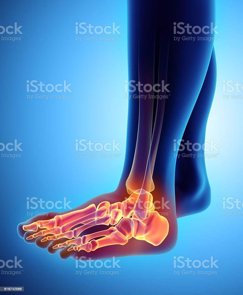 3D illustration of Foot Skeleton, medical concept. stock photo