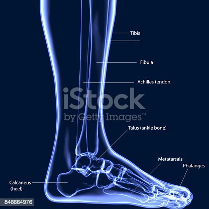 istock 3D illustration of Foot Skeleton - Part of Human Skeleton. 846664976