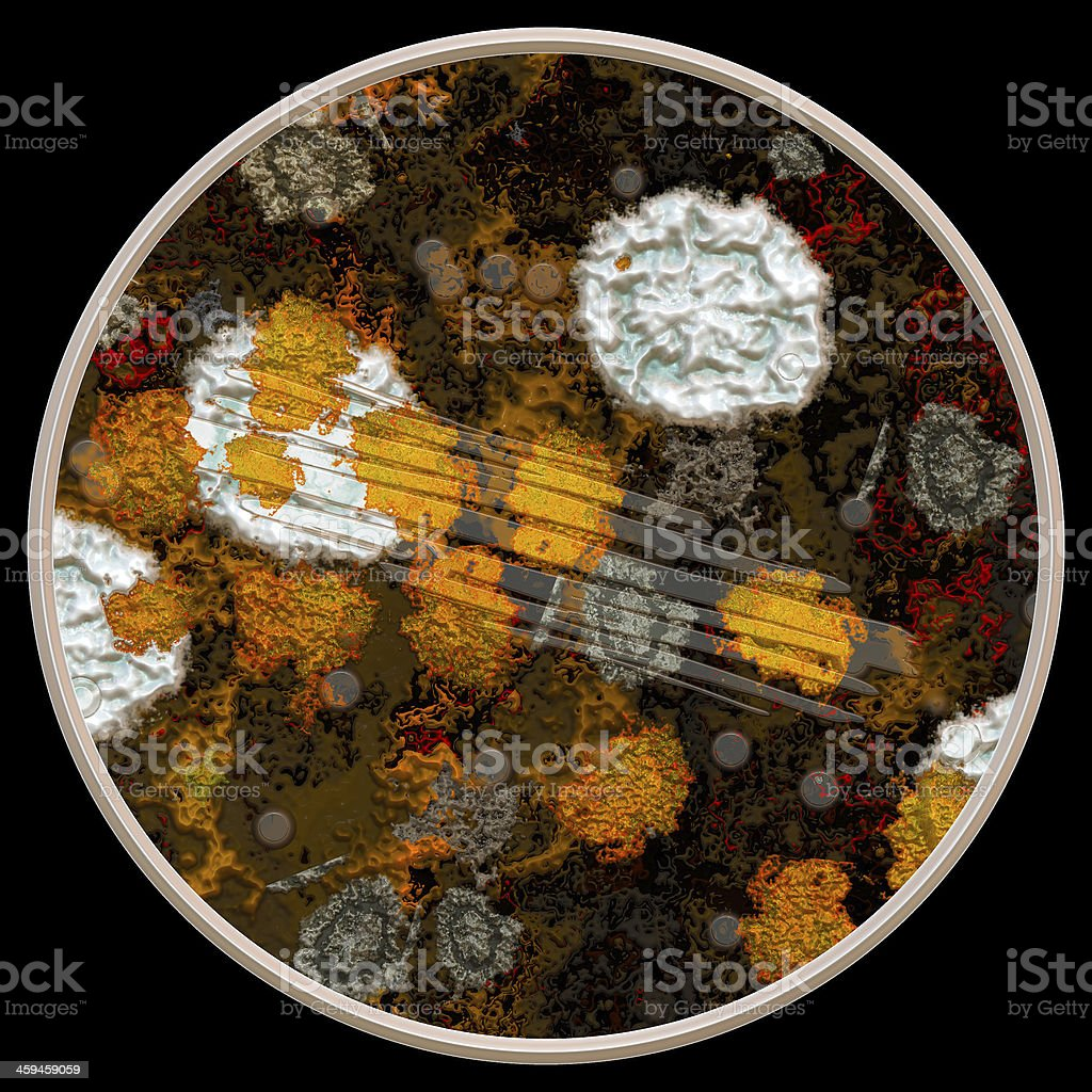 illustration of fungus stock photo