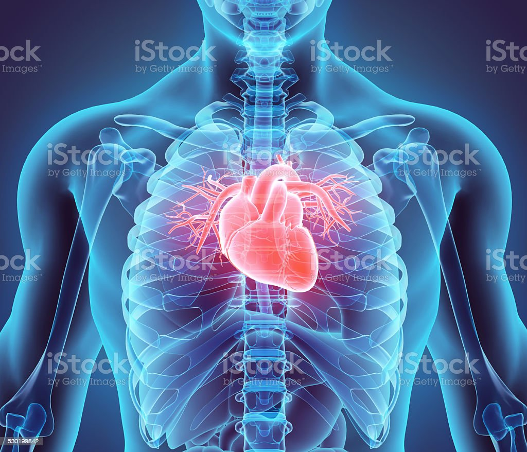 3D illustration of Heart, medical concept. royalty-free stock photo