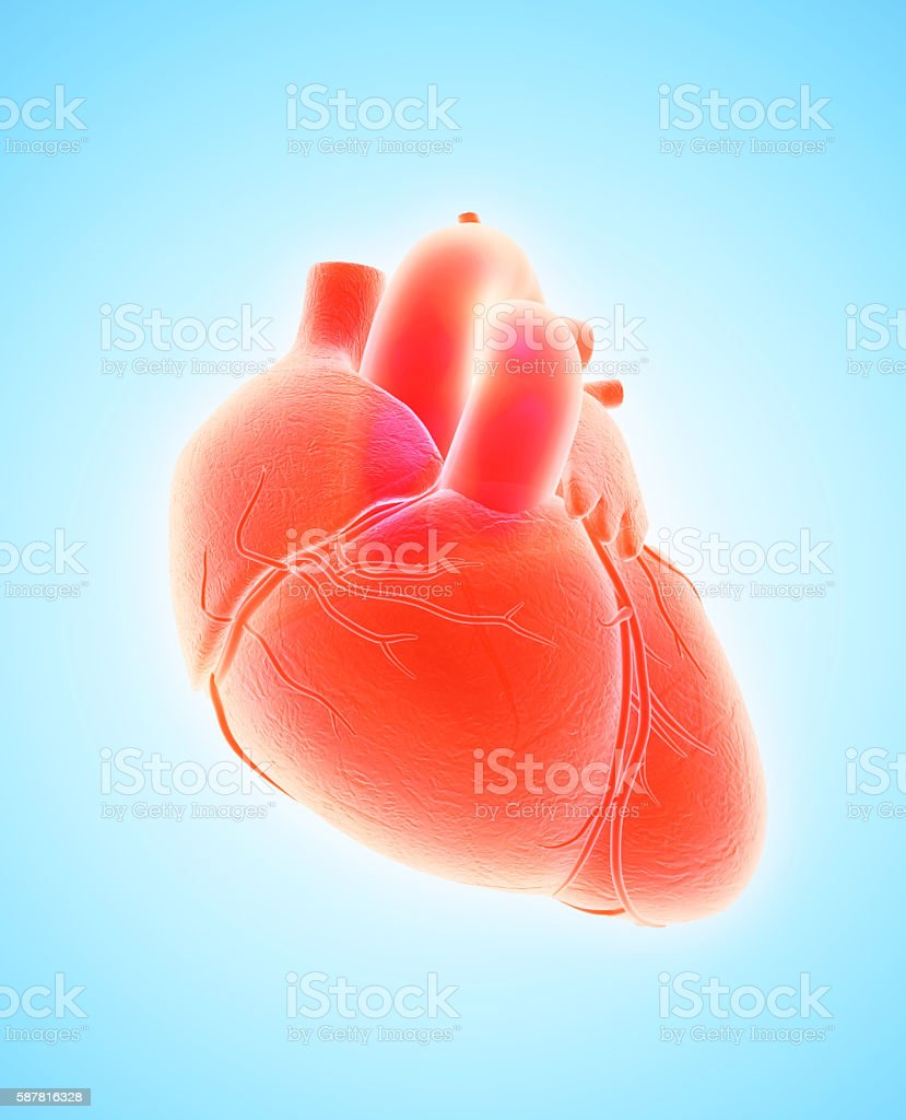3 D illustration de cœur, concept médical. - Photo