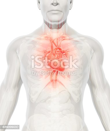 istock 3D illustration of Heart, medical concept. 639399032