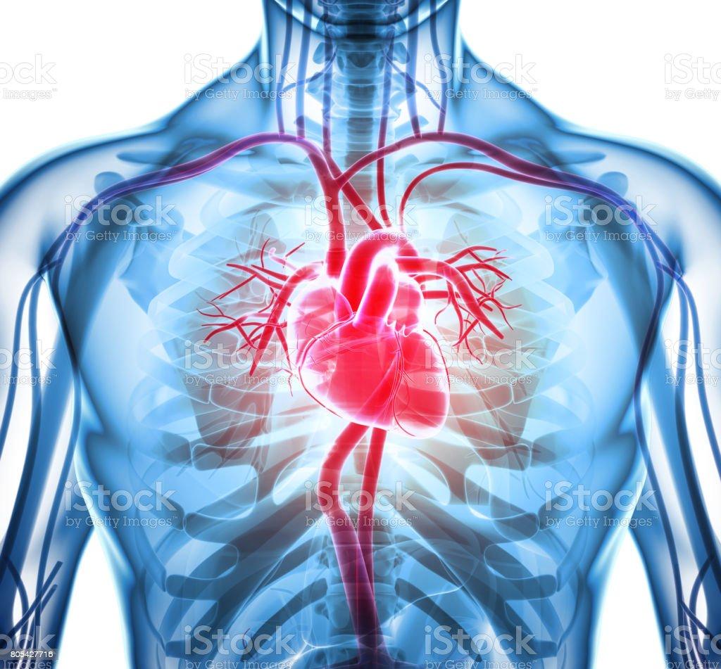 3 D ilustração de coração, conceito médico. - foto de acervo