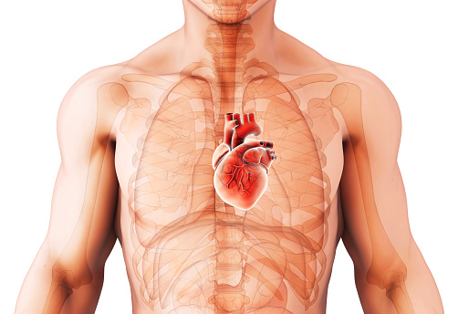 istock 3D illustration of Heart, medical concept. 903537576