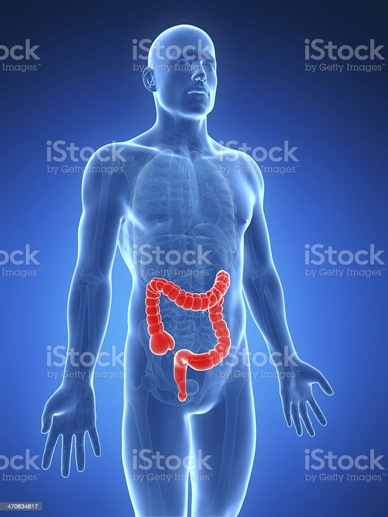 Illustration Of Human Body With Colon In Red Stock Photo Istock