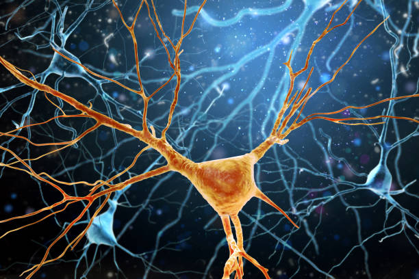3D Illustration of Human Brain Neurons structure. stock photo