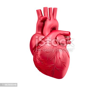 medical 3D rendering of a red human heart isolated on white background