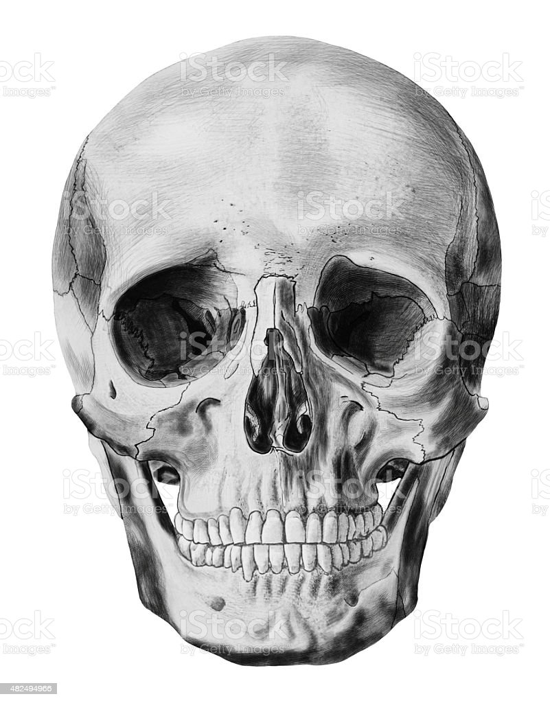 Illustration of human skull isolated on white background stock photo