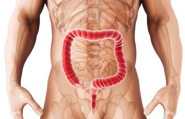 Royalty Free Transverse Colon Pictures, Images and Stock Photos - iStock