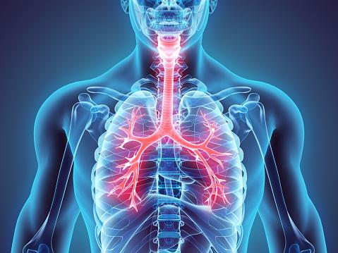 istock 3D illustration of Larynx Trachea Bronchi. 524386430