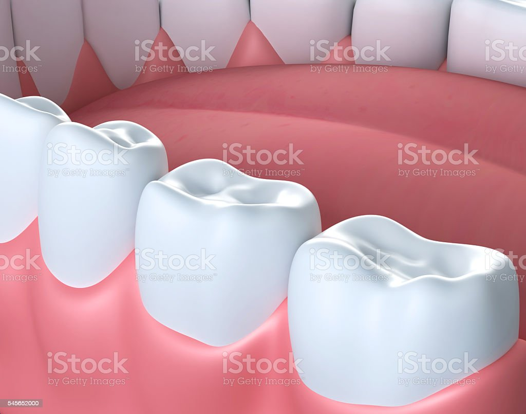 3D illustration of lower gum and teeth. stock photo