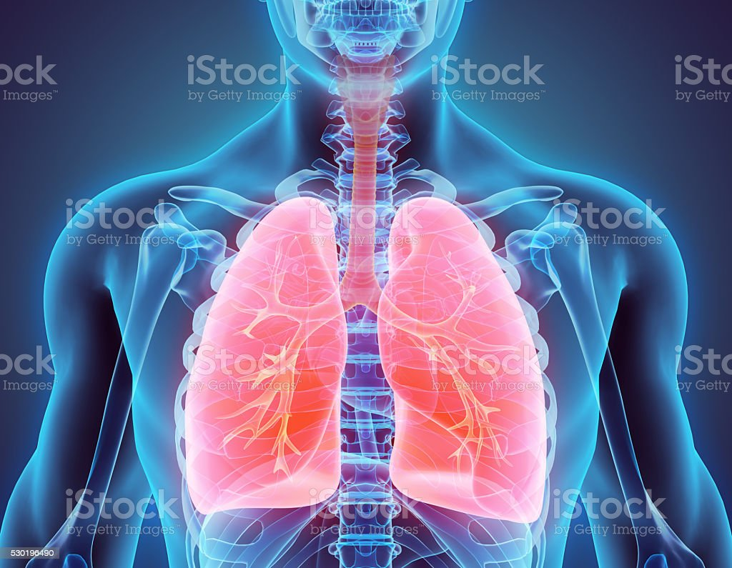 3D illustration of Lungs, medical concept. royalty-free stock photo