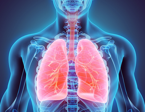 istock 3D illustration of Lungs, medical concept. 530196490