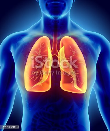 istock 3D illustration of Lungs, medical concept. 577938810
