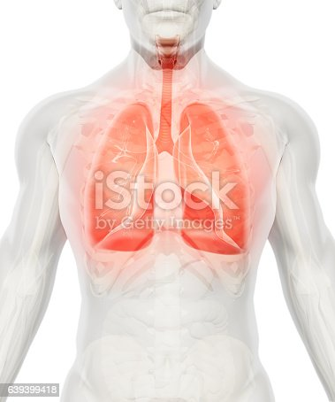 istock 3D illustration of Lungs, medical concept. 639399418