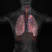 istock 3D illustration of Lungs, respiratory and circulatory system  medical concept. 1000068146