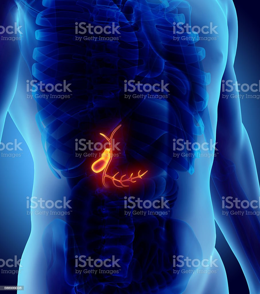 3D illustration of male Gallbladder. stock photo