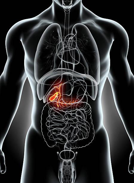 3d illustration of male gallbladder. - vesicula biliar - fotografias e filmes do acervo