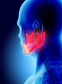 istock 3D illustration of Mandible, medical concept. 585052240