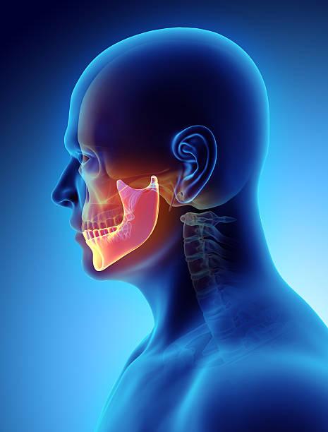 ilustración en 3d de mandíbula, concepto médico. - mandibula fotografías e imágenes de stock