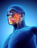 istock 3D illustration of Mandible, medical concept. 636681344