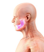 istock 3D illustration of Mandible, medical concept. 868406430