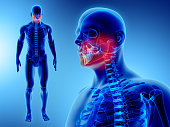 istock 3D illustration of Mandible, medical concept. 868407330