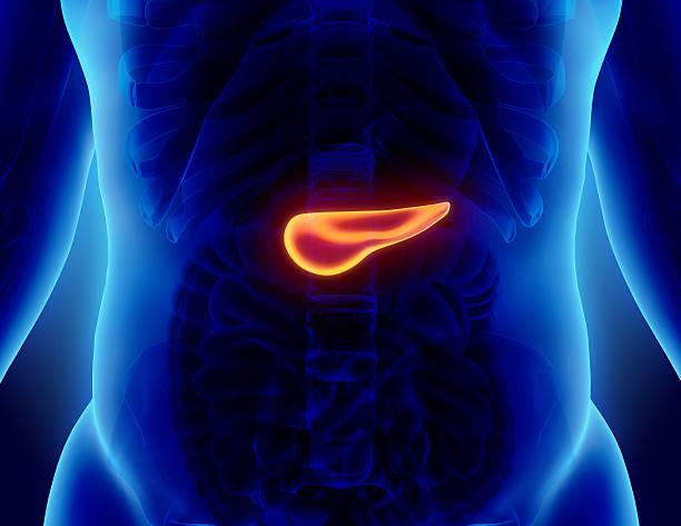 ilustração de 3d pâncreas - parte do sistema digestivo. - vesicula biliar - fotografias e filmes do acervo
