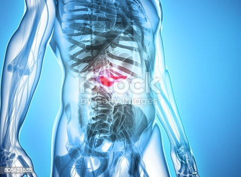 istock 3D illustration of Pancreas - part of digestive system. 805431538