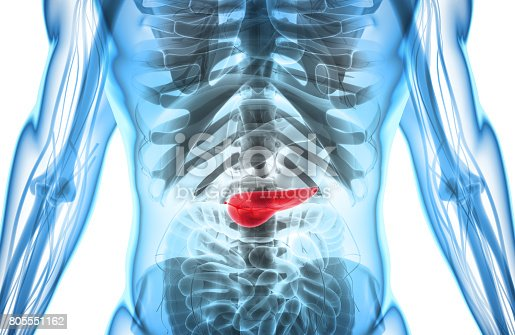 istock 3D illustration of Pancreas - part of digestive system. 805551162