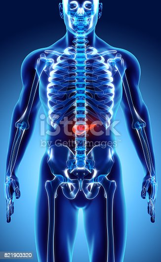 istock 3D illustration of Pancreas - part of digestive system. 821903320