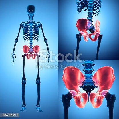 istock 3D illustration of Pelvis, medical concept. 854099218