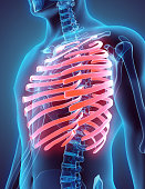 istock 3D illustration of Ribs, medical concept. 531862370